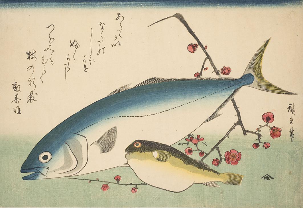 Zwei Fische und ein blühender Pflaumenzweig, Utagawa Hiroshige, Japan, um 1837, Inv.Nr. B31887, C.jpg
